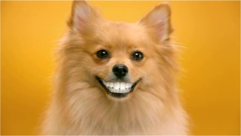 Dog teeth image
