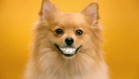 Dog teeth image