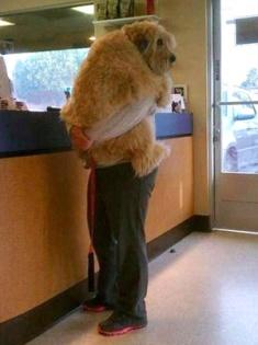 We help put nervous pets at ease