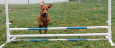 Jump dog
